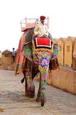 india amber palace elephant
